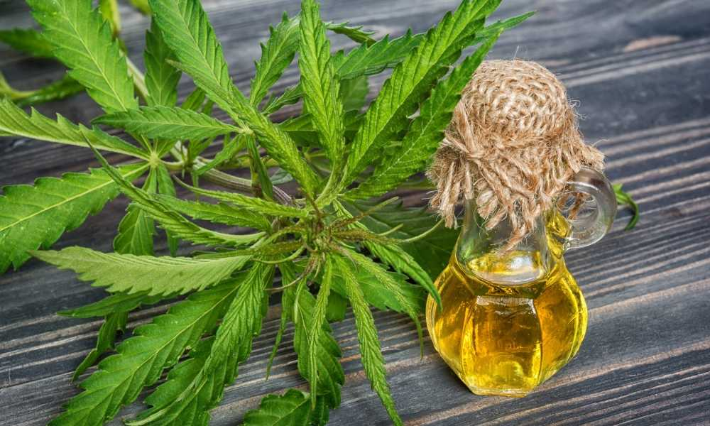 Can Hemp Oil Make You Fail Drug Test