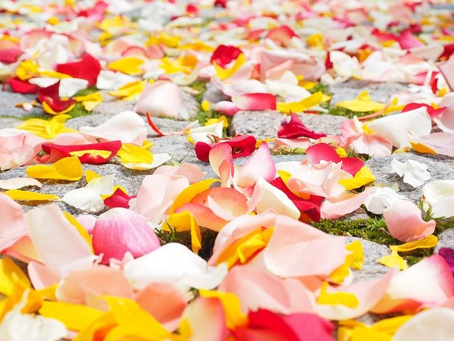 How to make rose water with all coulour rose petals